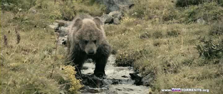Клара и тайна медведей | BDRip | L1