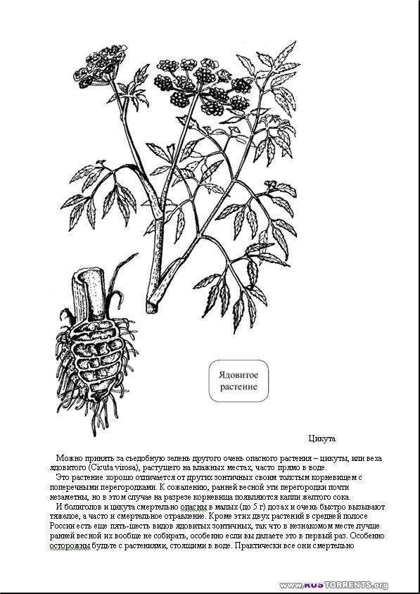 Кухня Робинзона. Рецепты блюд из дикорастущих растений и цветов