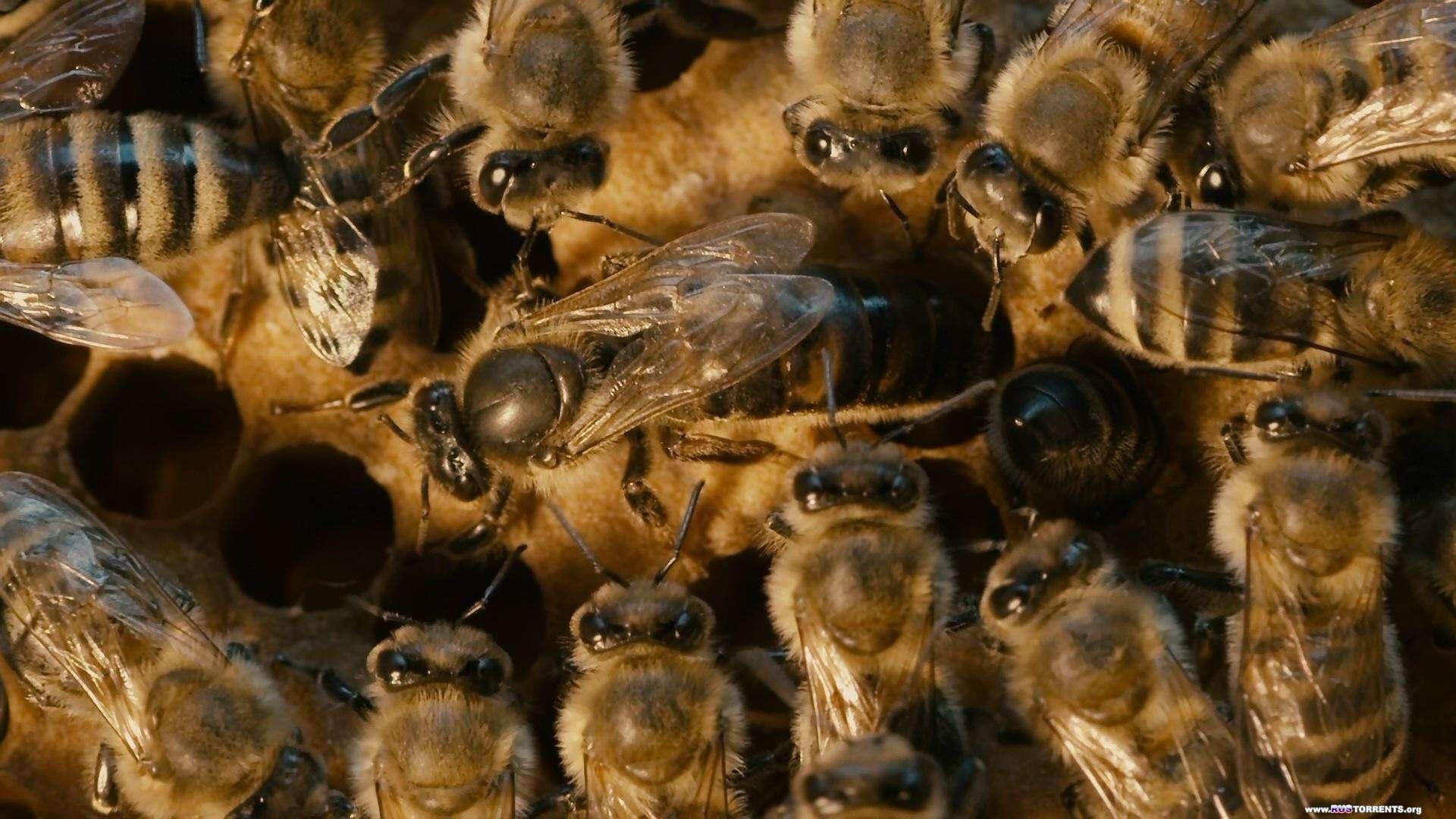 Больше чем мёд | BDRemux 1080p