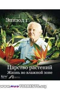 Царство растений |Эпизод 1 - Жизнь во влажной зоне| BDRip