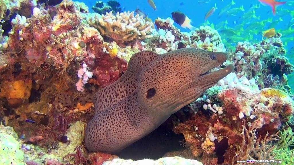 Хищники океанов 3D | BDRip-AVC