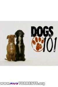 Введение в собаковедение