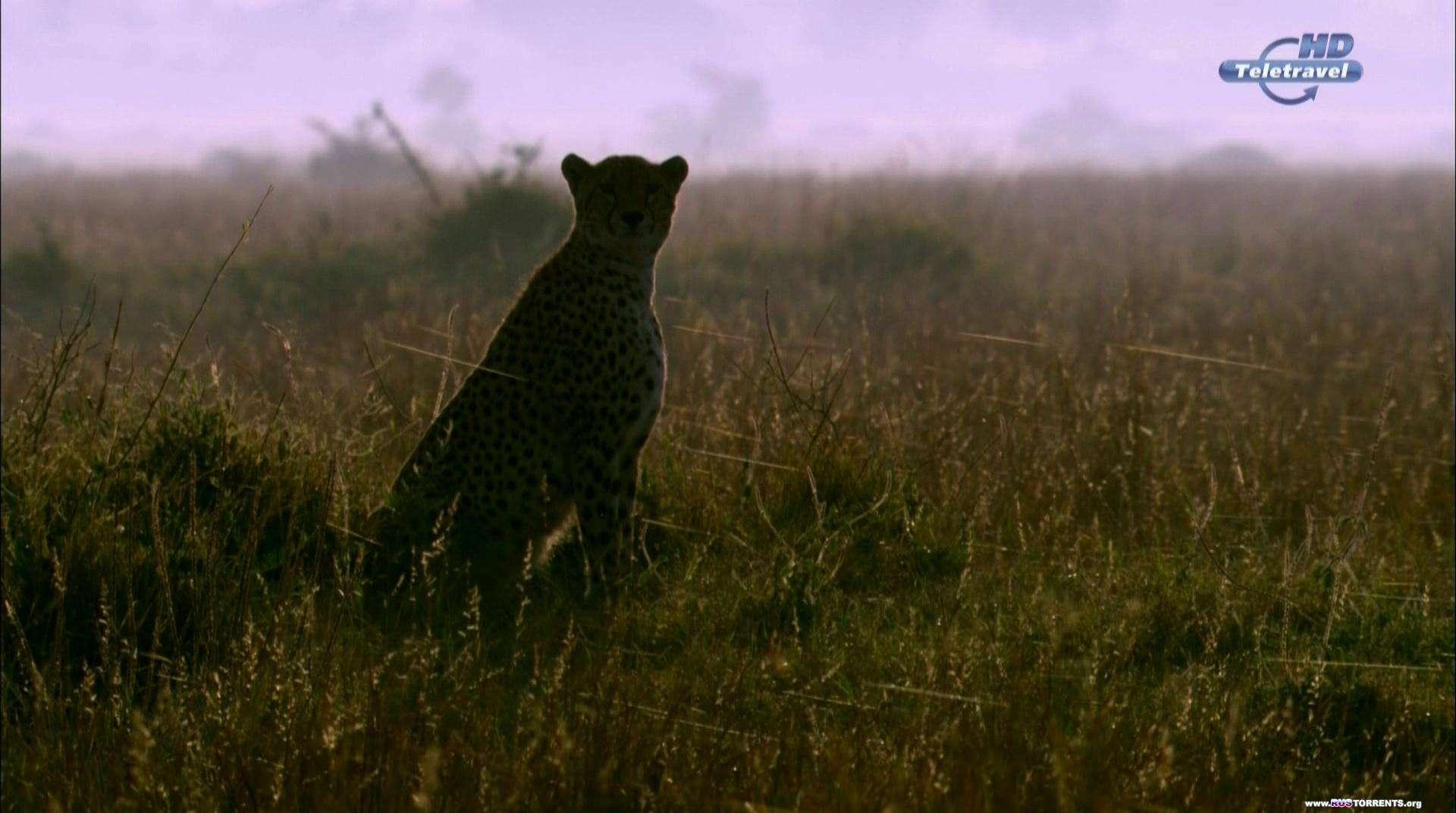 Великий поход зебр | HDTVRip 1080p