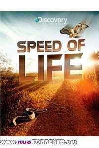 Discovery: Скорость жизни (3 серии из 3)