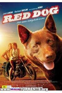 Рыжий пес | HDRip
