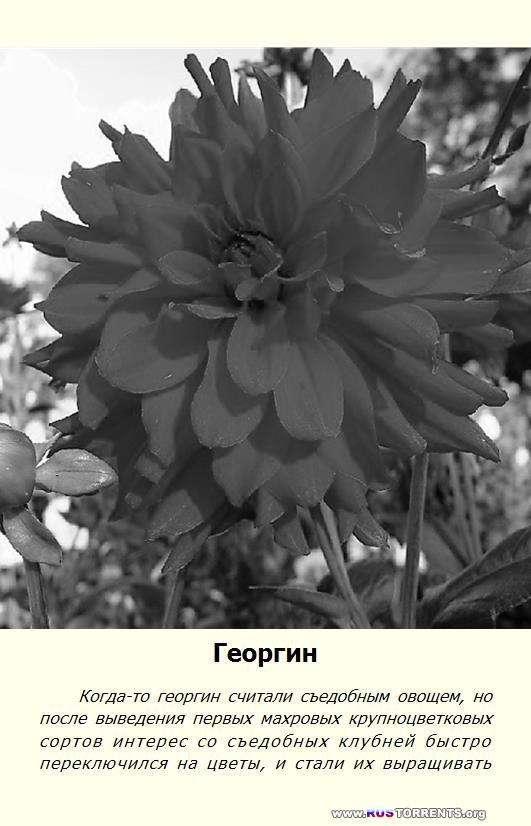Справочник умелого цветовода | PDF