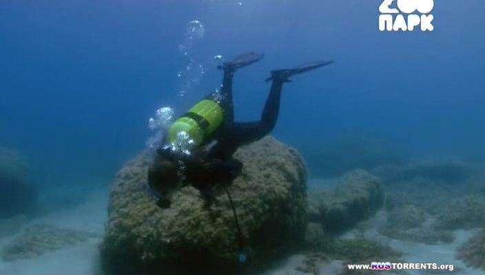 Пришельцы со дна океана (Причудливые обитатели морских глубин) | SATRip