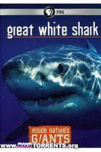 Nat Geo Wild: Анатомия крупнейших животных. Большие белые акулы | HDTVRip 720p