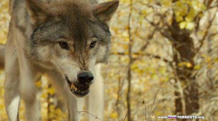 Против природы | WEB-DLRip | L1