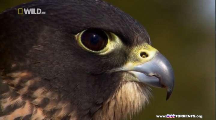 Сила Хищных Птиц | HDTVRip