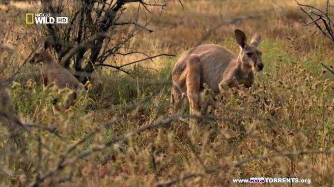 Дикая Австралия [01-04 из 04] | HDTVRip | Р1