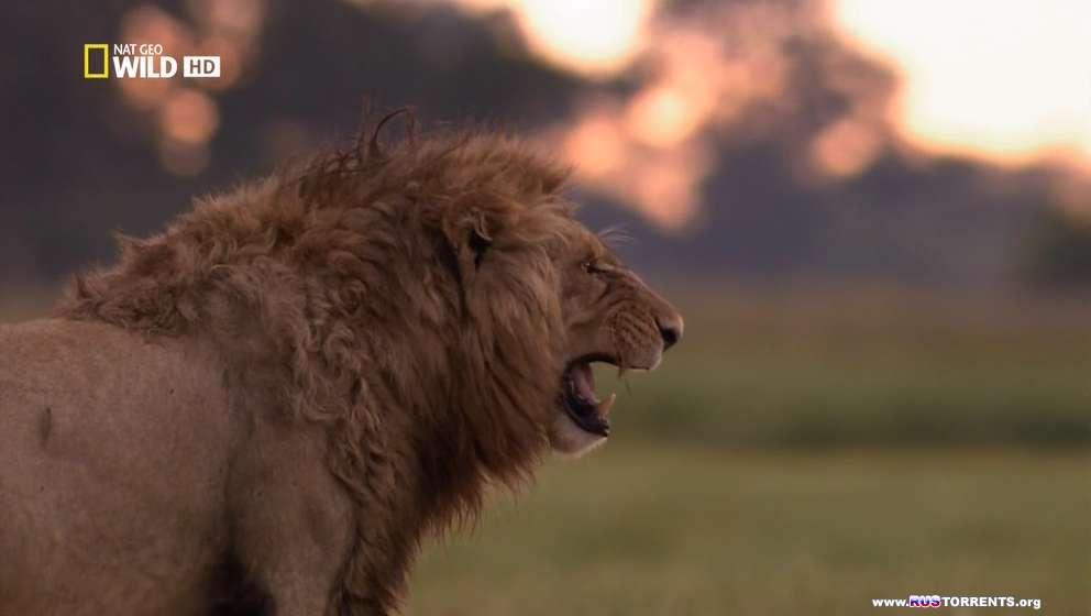 Nat Geo Wild: Болотные львы | HDTVRip-AVC