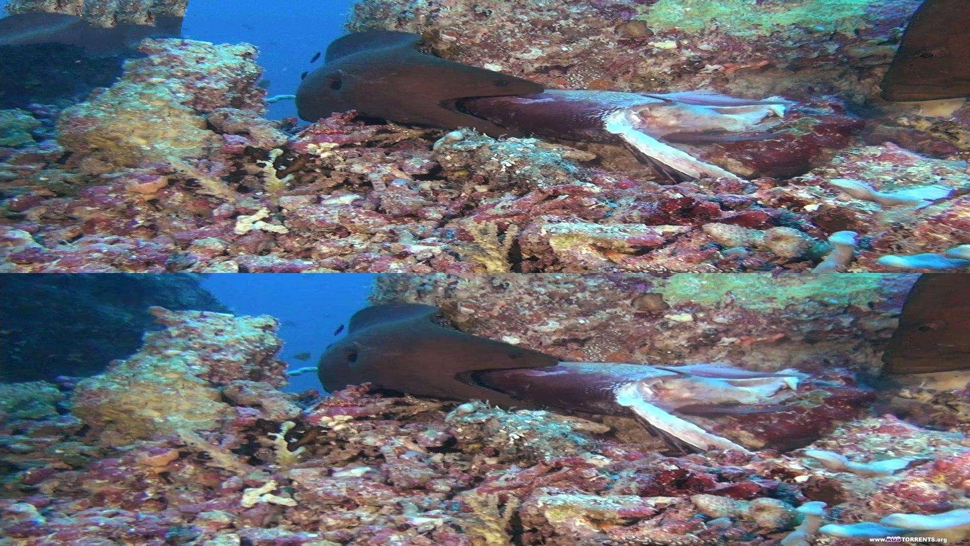 Коралловый риф - Том 3: Охотники и добыча 3D | BDRip 1080p | 3D-Video HOU