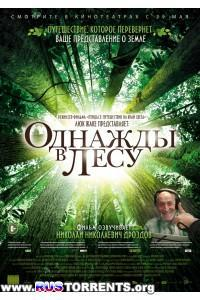 Однажды в лесу | BDRip 720p | P1