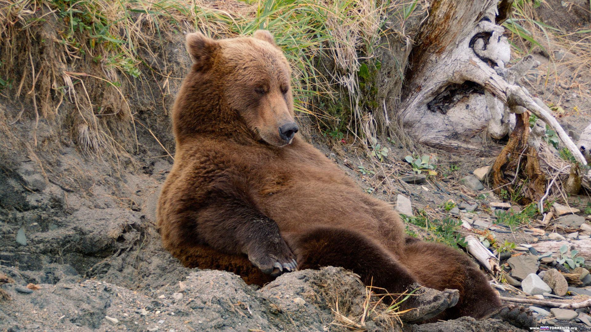 Медведи | BDRip 1080p
