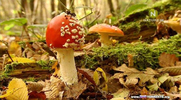 Лесные тайны (02 из 02) | HDTVRip