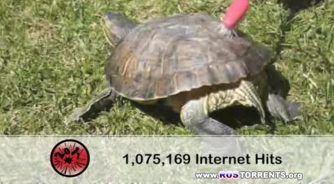 100 лучших Youtube-видео 2010 года по версии Rude Tube