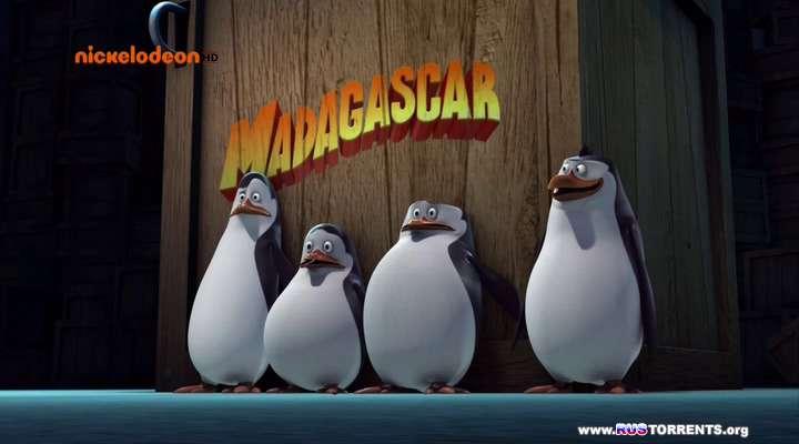Пингвины Мадагаскара [S01] | HDTVRip