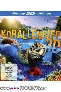 Кораллы 3Д: Магия Индо-Тихоокеании | BDRip 1080p | 3D-Video HOU