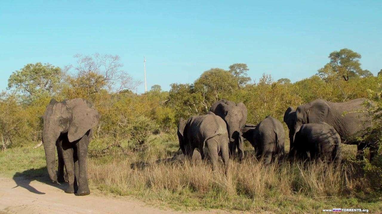 Дикая Южная Африка: Большая пятерка | BDRip 720p