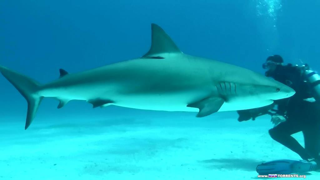 Тайны планеты Земля. Акулы : Властелины подводного мира   BDRip-AVC