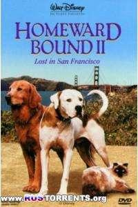 Дорога домой 2: Затерянные в Сан-Франциско | DVDRip