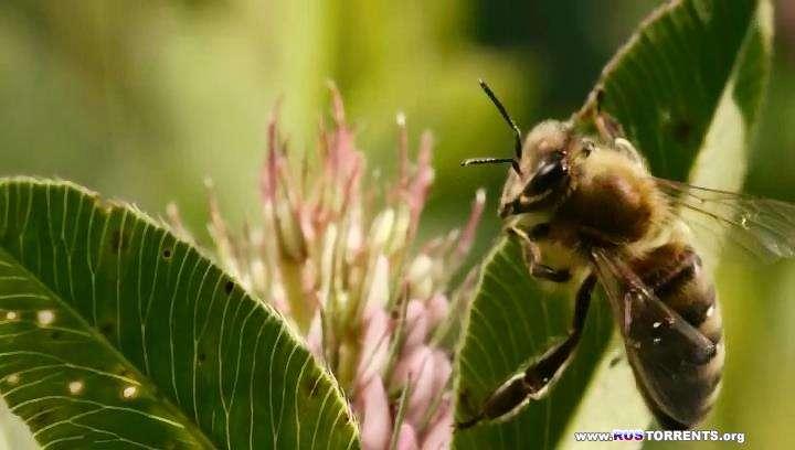 Больше чем мёд | BDRip