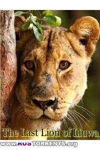 Animal Planet: Последняя львица Лиувы | HDTVRip 720p