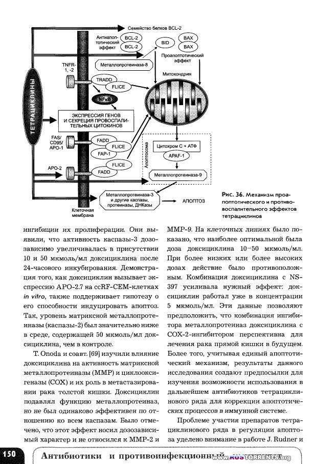 Антибиотики и противоинфекционный иммунитет