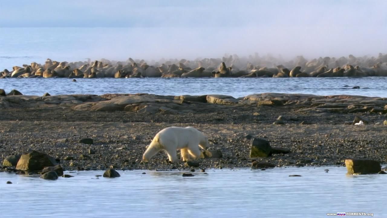 BBC: Планета Земля. Ледяные миры | 1 сезон | 6 эпизод из 11 | HDDVDRip 720p