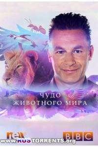 BBC. Чудо животного мира [S01x01-06] | HDTVRip | P1