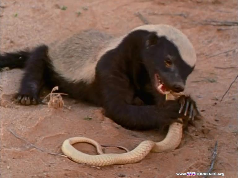 Медоеды: Змеиные убийцы | DVDRip-AVC