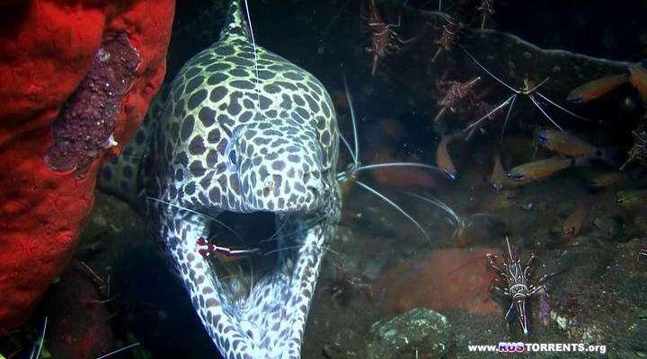 Подводный учебник по пикселям | BDRip