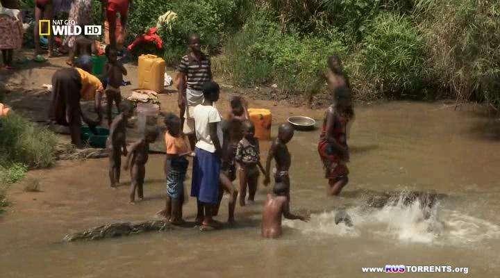 National Geographic: Атака нильского крокодила | HDTVRip