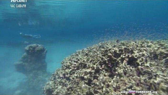 Animal Planet: Акулы Палау | SATRip