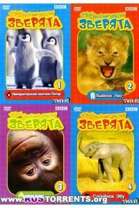 BBC: Твои веселые друзья зверята (01-52 из 52) | DVDRip