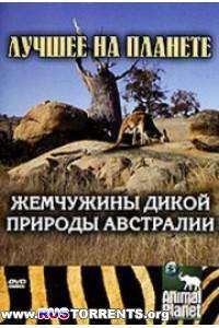 Animal Planet: Жемчужины дикой природы