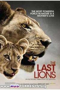 Последние львы | HDRip