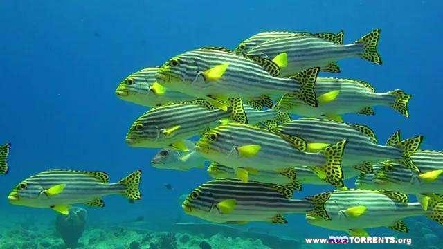 Хищники океанов 3D | HDRip | КПК