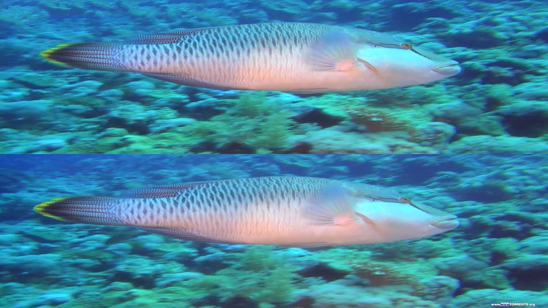 Коралловый риф 3D: Подводный мир Египта | BDRip 1080p | 3D-Video HOU | Лицензия