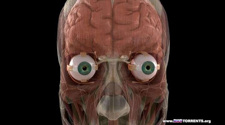 Discovery: Тело человека. Грани возможного (1-4 серии из 4) | HDRip