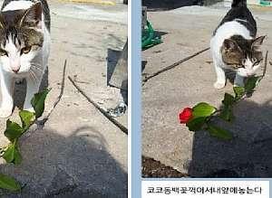 사랑하는 집사(주인)에게 '붉은 꽃'을 꺾어다 준 로맨틱한 고양이