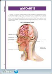 Большой иллюстрированный атлас анатомии человека (2016)