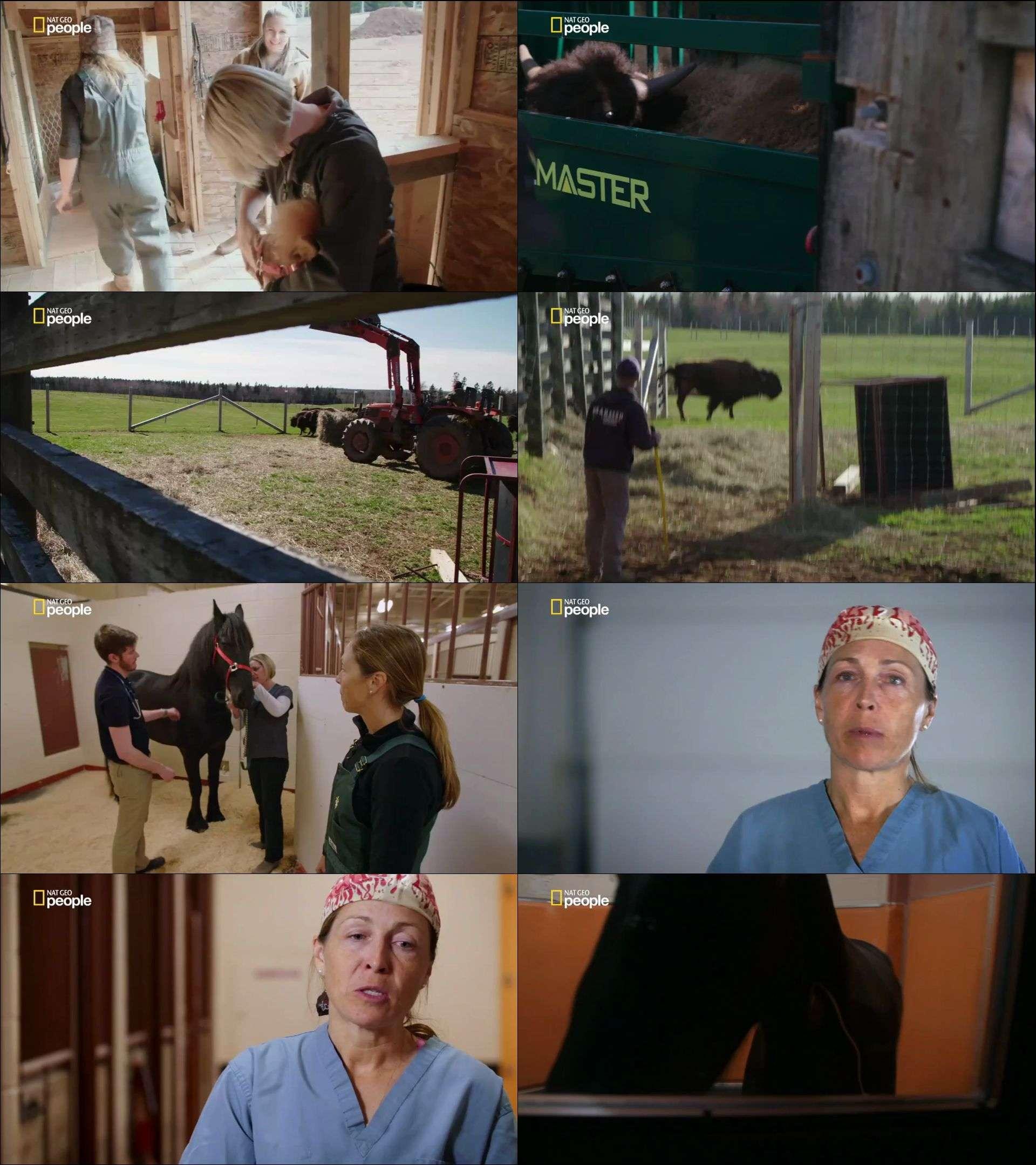 Nat Ge People - Yukon Veterineri belgesel serisi türkçe dublaj indir