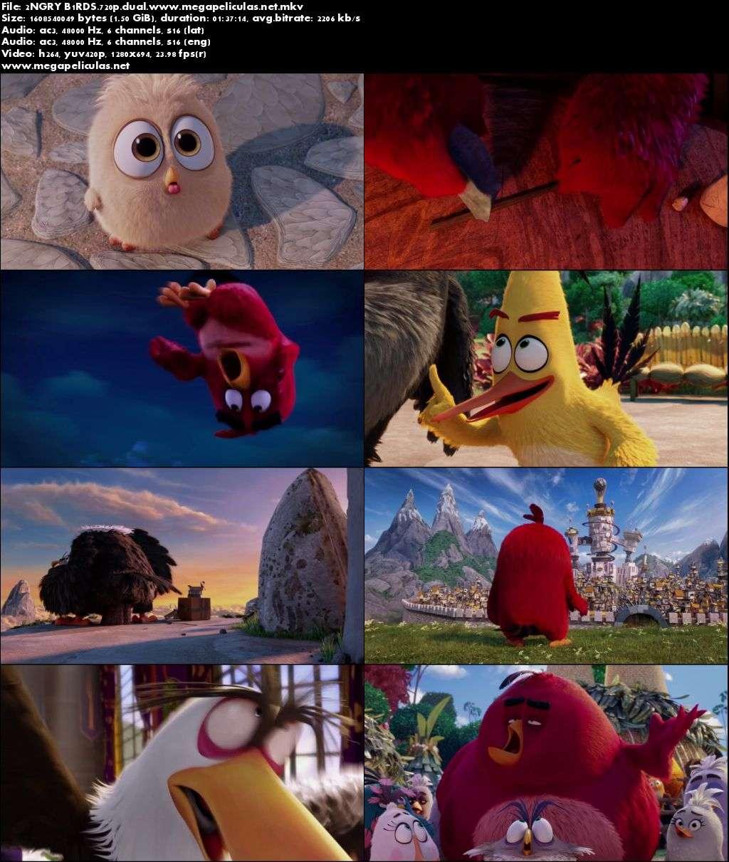 Capturas de Angry Birds (2016)[BrRip 720p][Dual Latino-Ingles]