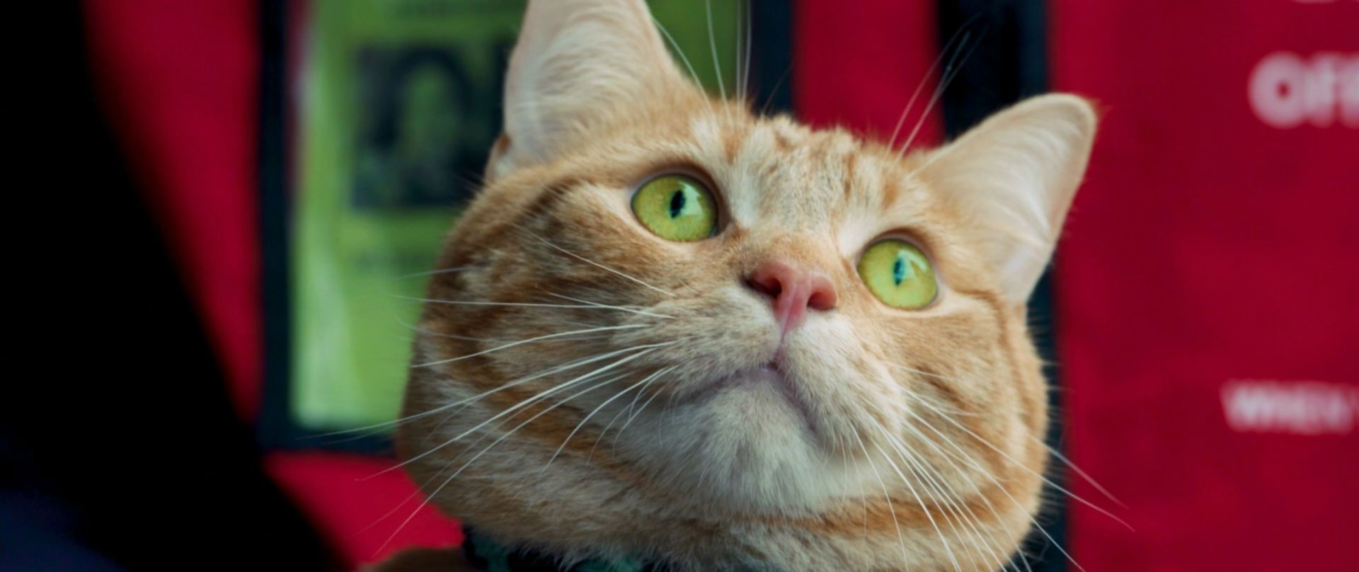 Уличный кот по кличке Боб   BDRip 1080p   Лицензия