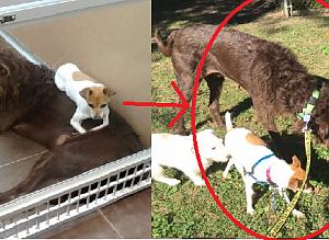 서로 꼭 붙어다니는 두 마리의 단짝 강아지가 절대 떨어지지 않는 이유
