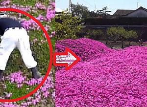 많은 사람들이 깜짝 놀란 80대 노인이 2년 넘게 쉬지 않고 꽃을 심은 이유