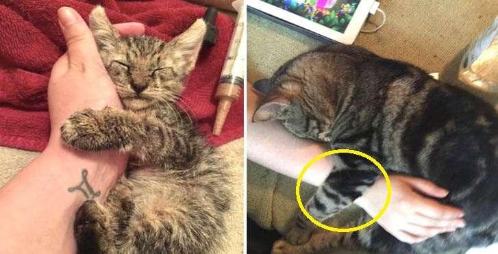 버림받은 상처때문에 자신을 떠나지말라며 매일 주인 손을 꼭 붙잡고있는 고양이