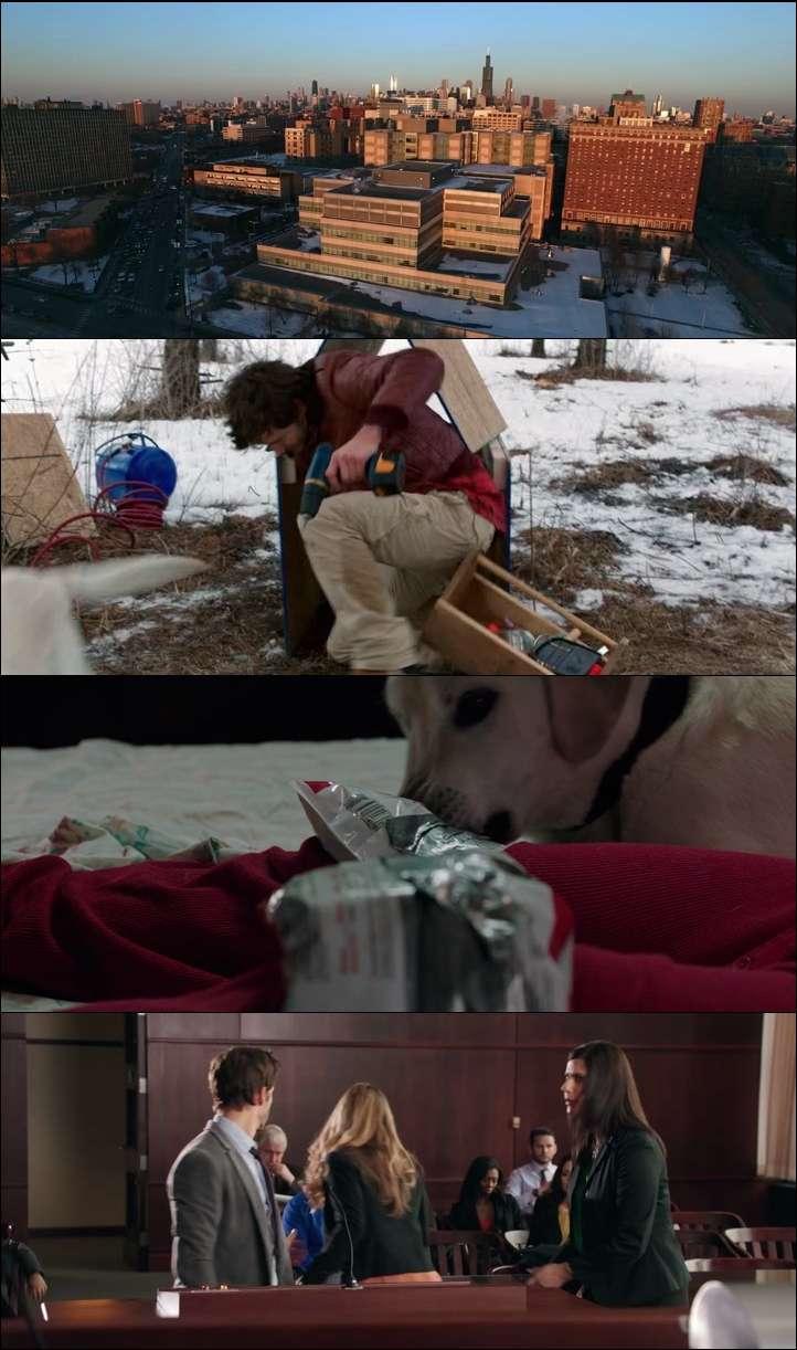 Köpeği Kim Alacak? - Who Gets The Dog (2016) türkçe dublaj film indir